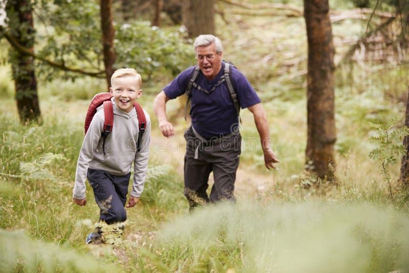 Abuelo y nieto que caminan en un bosque entre el verdor, foco selectivo foto de archivo libre de regalías