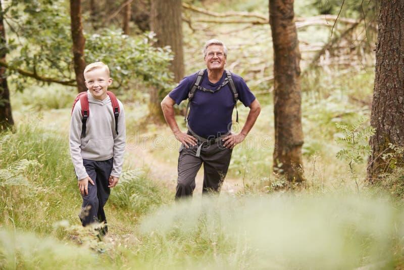 Abuelo y nieto que toman una rotura mientras que camina en un bosque, foco selectivo imagenes de archivo