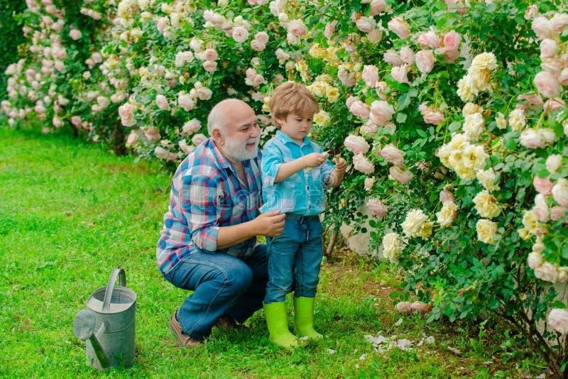 Abuelo y nieto Viejo y joven Concepto de una edad del retiro Plantas crecientes Un abuelo y un niño son fotografía de archivo