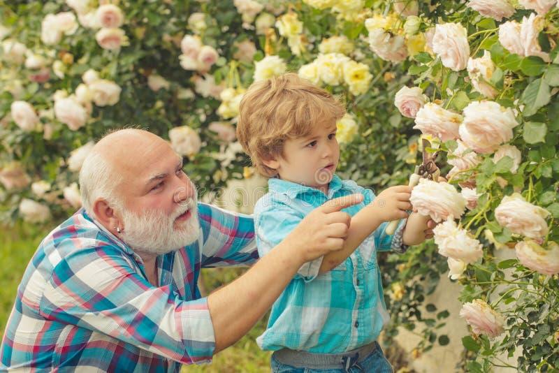 Abuelo y nieto Viejo y joven Concepto de una edad del retiro Retrato del abuelo y del nieto mientras que trabaja imagen de archivo