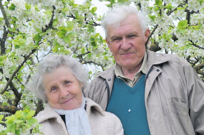 Abuelos felices en jardín floreciente fotografía de archivo
