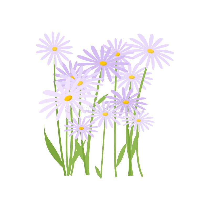 Abundância azul e margaridas brancas que crescem no canteiro de flores no fundo vazio ilustração royalty free