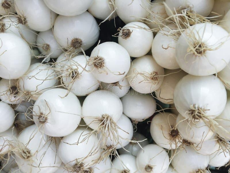 Abundância de bulbos da cebola branca foto de stock