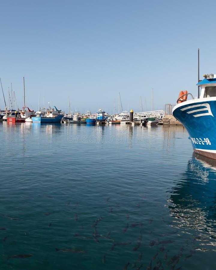 Abundância dos peixes em Puerto Morro Jable fotografia de stock
