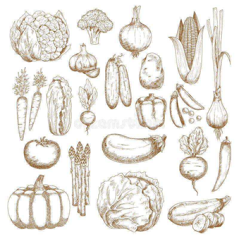 Abundância outonal de vegetais recentemente colhidos ilustração do vetor