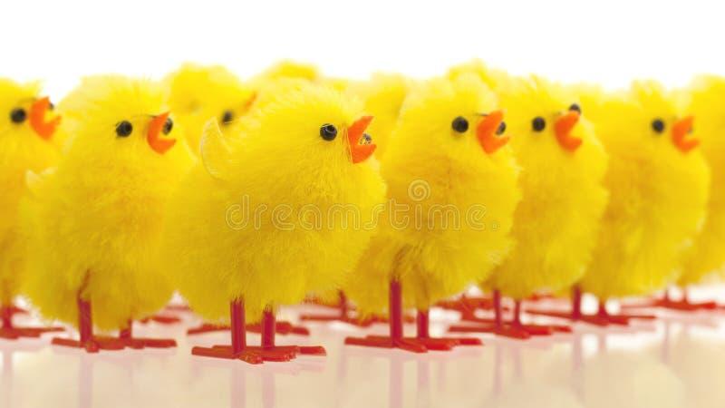 Abundance of easter chicks, selective focus royalty free stock photos