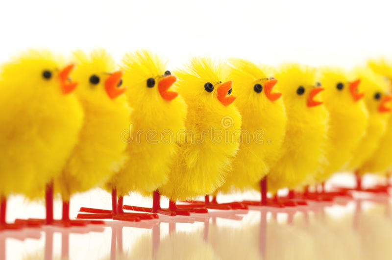 Abundance of easter chicks, selective focus stock images