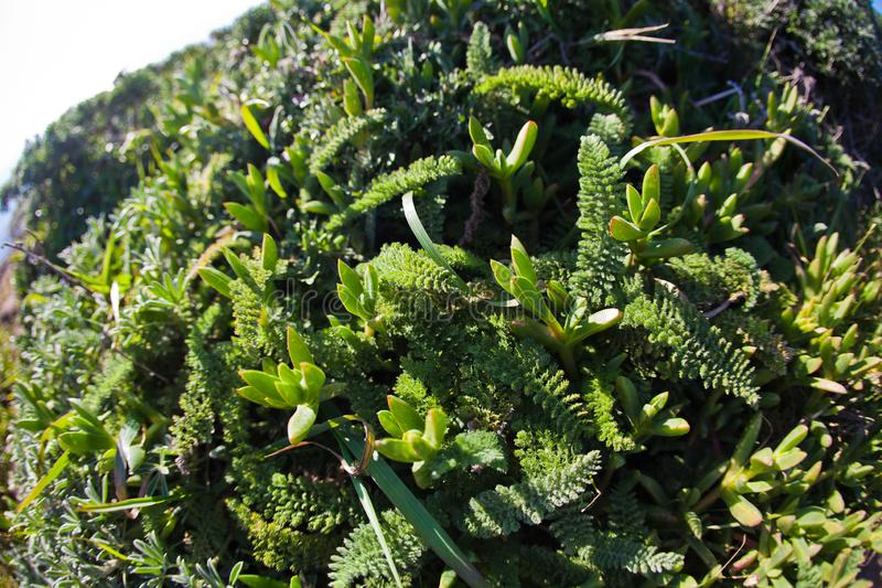 Abundance of nature plants. Point Reyes, United States - March 03, 2012 : Nature is so abundant on this vast peninsula. A special place where the San Andreas stock photos