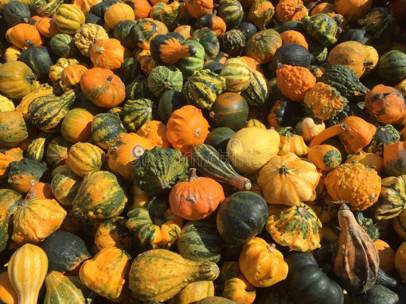 Abundance of pumpkins royalty free stock image