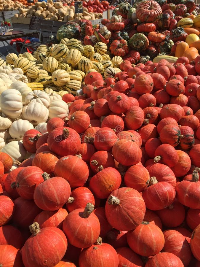 Abundance of pumpkins. Many pumpkins in various colors and sizes on a local farmer market stock photo