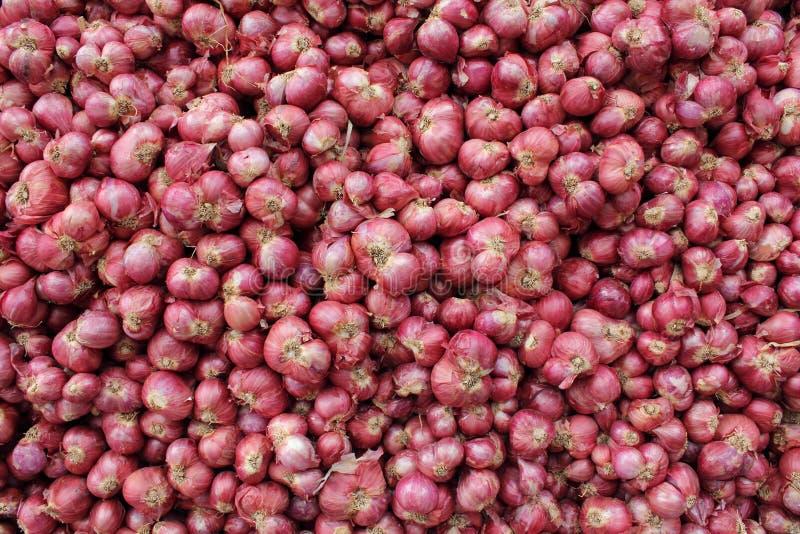 Download Abundance of red onions stock photo. Image of garnish - 18859080