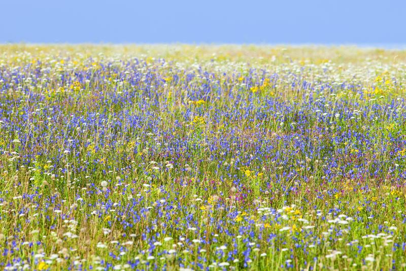 Abundance of Wild Flowers on a Meadow royalty free stock photos
