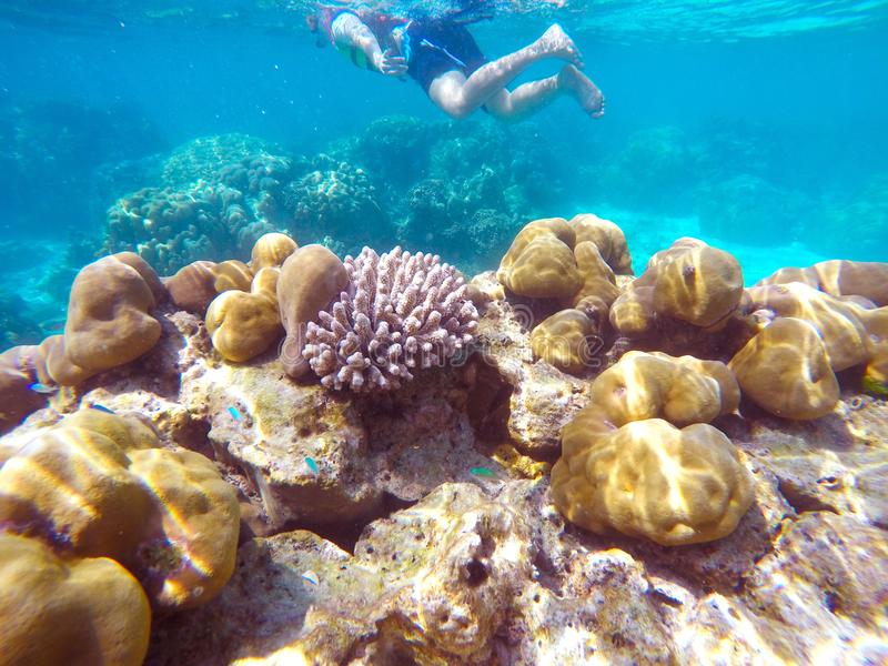 The abundant of shallow coral reefs in the Southern of Thailand, where is home to many small colorful fishes and marine animals. royalty free stock image
