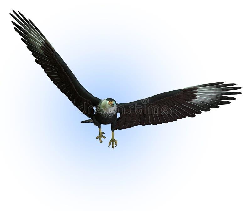 Abutre do CaraCara no vôo - inclui o trajeto de grampeamento ilustração do vetor
