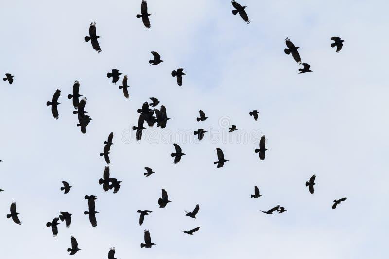 Abweichenmenge von Türmen im schnellen Flug lizenzfreies stockbild