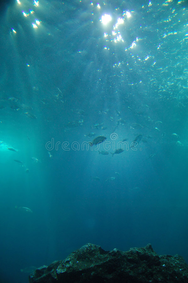 Abyss. Underwater with fishes and stones