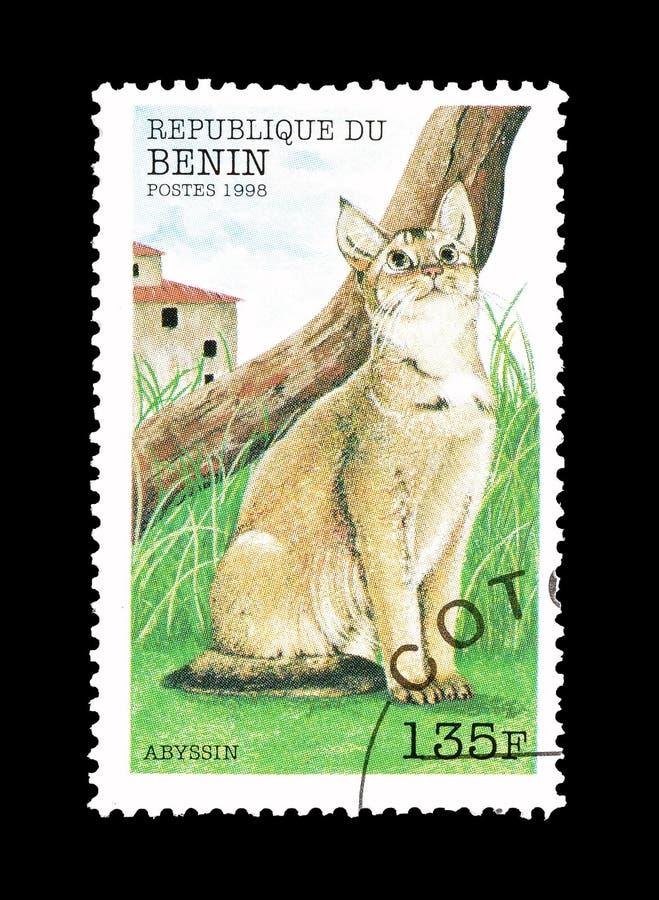 Abyssinian katt på portostämpel royaltyfri bild