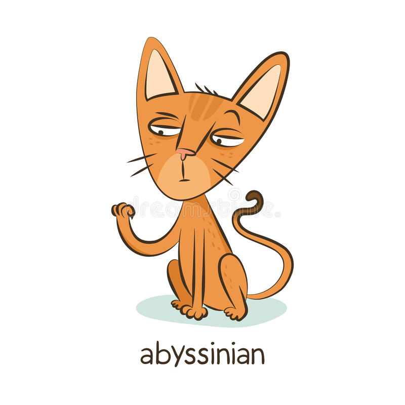 abyssinian Kattenkarakter op wit royalty-vrije stock afbeeldingen