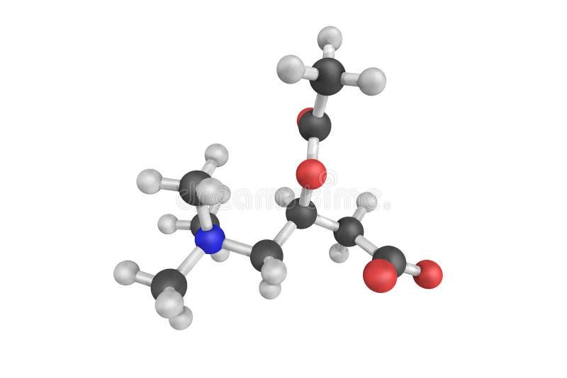 Acétyle-L-carnitine, naturellement produite par le corps, bien qu'il illustration de vecteur