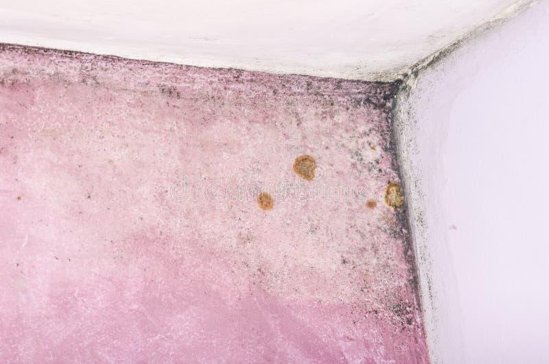 Acúmulo do molde e da umidade na parede cor-de-rosa imagem de stock royalty free