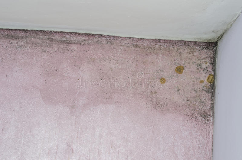 Acúmulo do molde e da umidade na parede cor-de-rosa imagem de stock