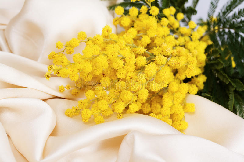 Download Blossoming mimosa stock photo. Image of mimosa, flowers - 29897802