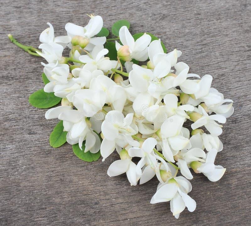 Acacia de floraison photos stock