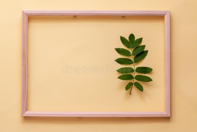 Acacia groen blad op gele achtergrond royalty-vrije stock foto's