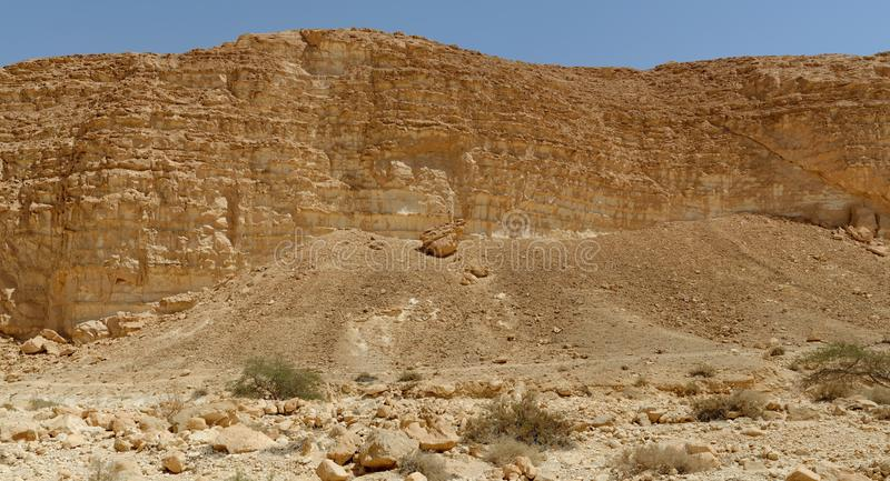 Acacia trees and bushes at the bottom of the rocky wall in the desert stock photography