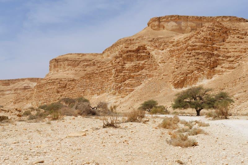 Acaciabomen bij de bodem van de woestijnvallei onder de gestreepte bergen royalty-vrije stock afbeelding