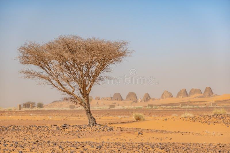 Acaciaboom in de woestijn van de Soedan met een groep piramides op de achtergrond stock foto