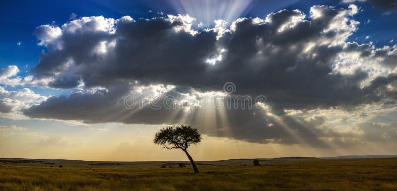 Acaciaboom en zonsondergang in het Masai Mara-panorama stock afbeelding
