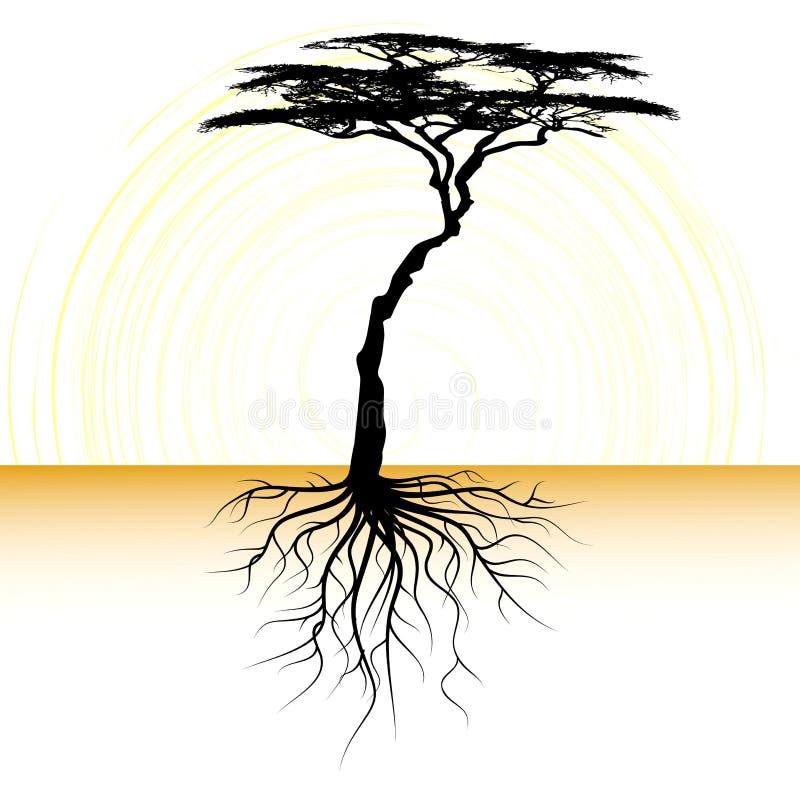 Acaciatree med en rota stock illustrationer