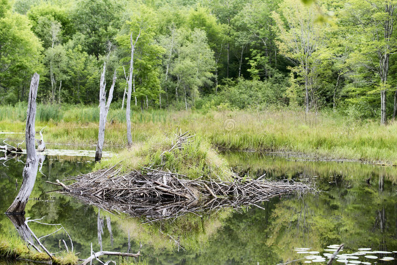 Acadia-Nationalpark - Biber-Hütte lizenzfreie stockbilder