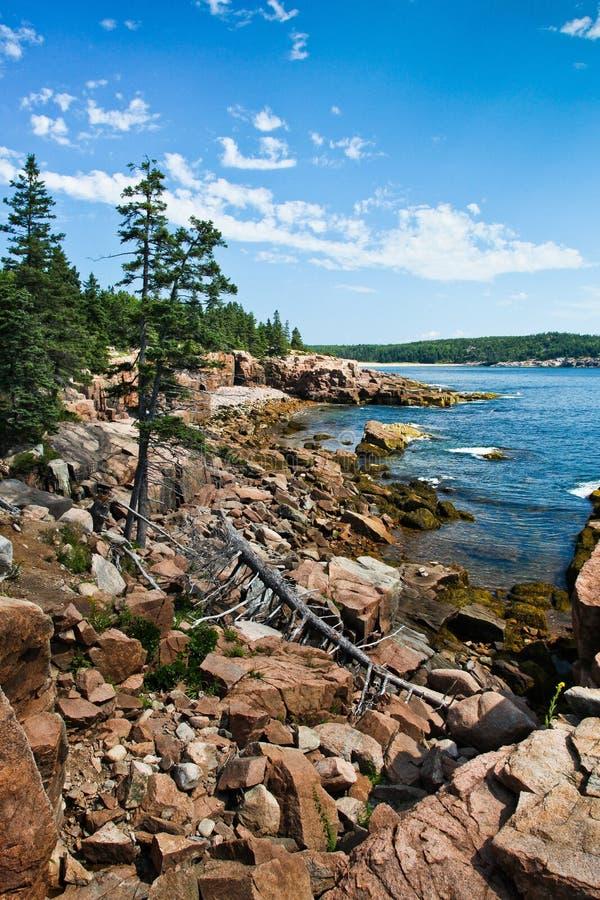 Acadia parka narodowego wybrzeże obraz royalty free