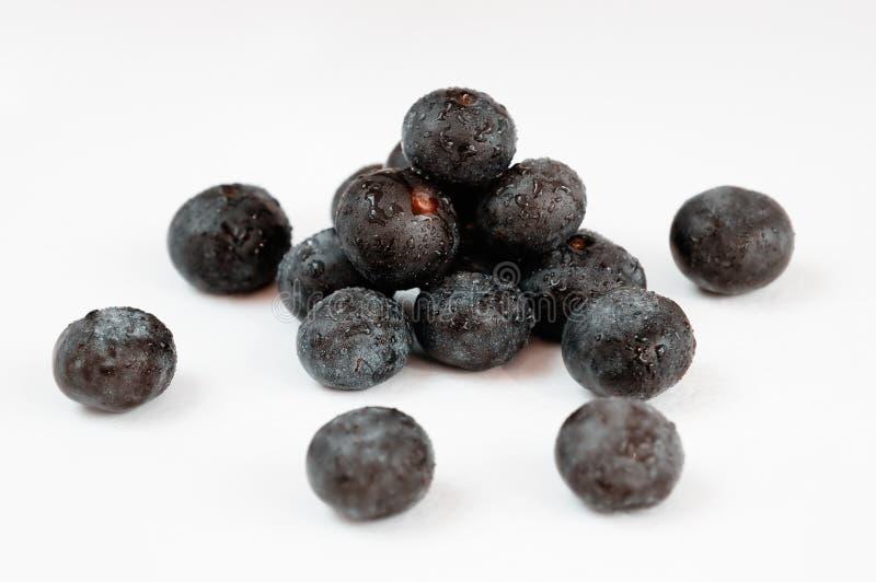 acai莓果 免版税库存图片