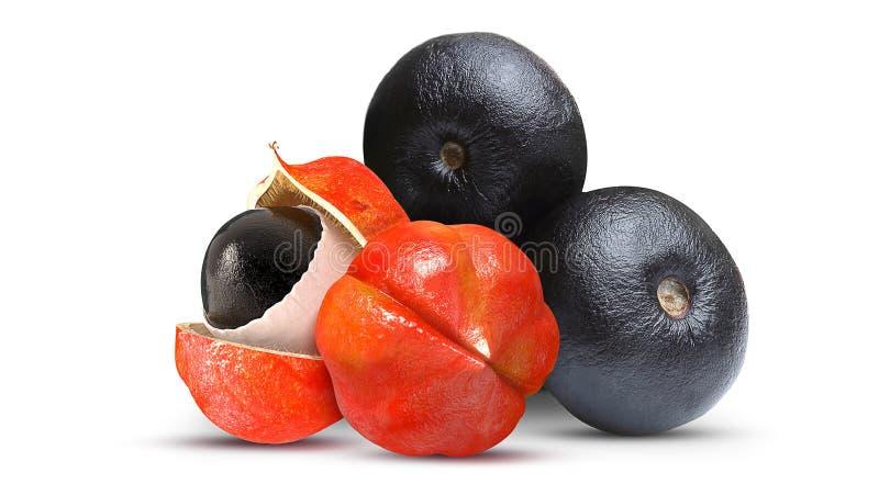 Acai και βραζιλιάνα φρούτα φρούτων Guarana στοκ φωτογραφίες