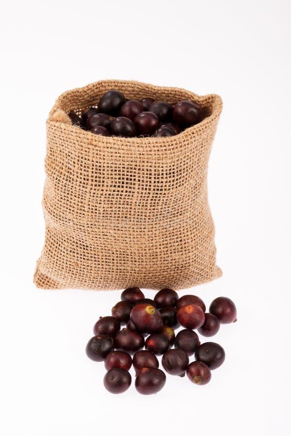 Acai amazonian fruit royalty free stock photo