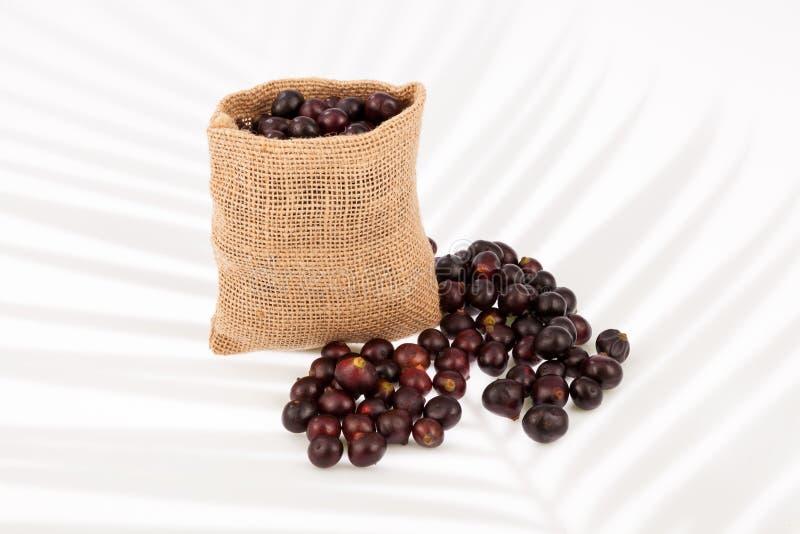 Acai amazonian fruit royalty free stock images