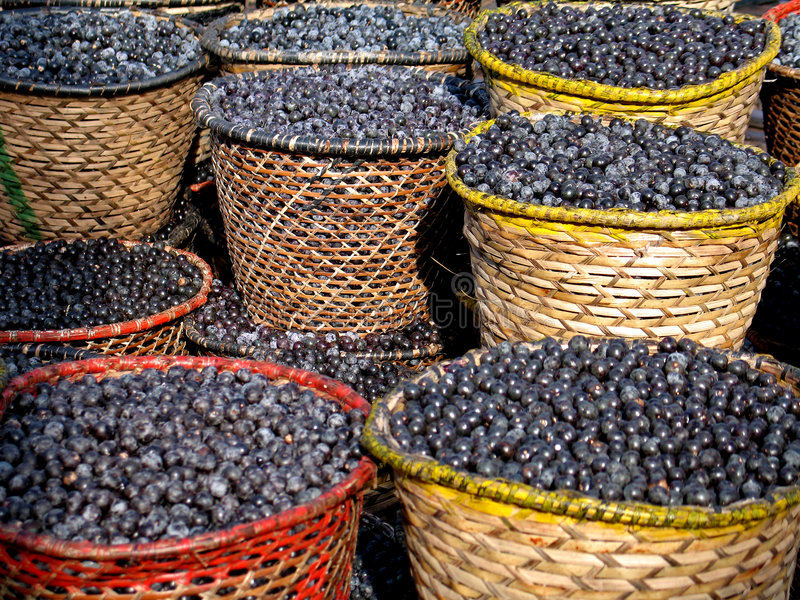 Download Acai in baskets stock photo. Image of botanical, health - 8981188