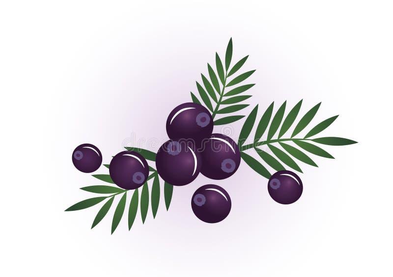 Download Acai berry stock illustration. Illustration of healing - 45637676