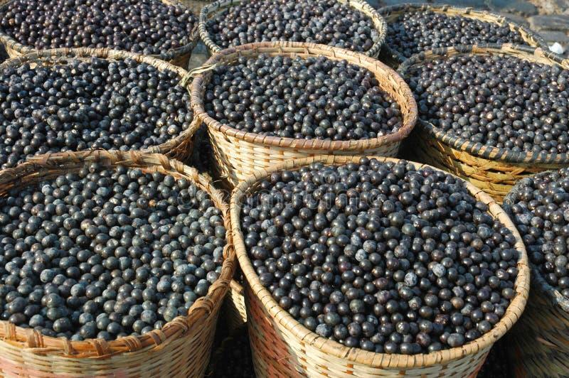 Acai Frucht-Ernte und Markt stockfoto