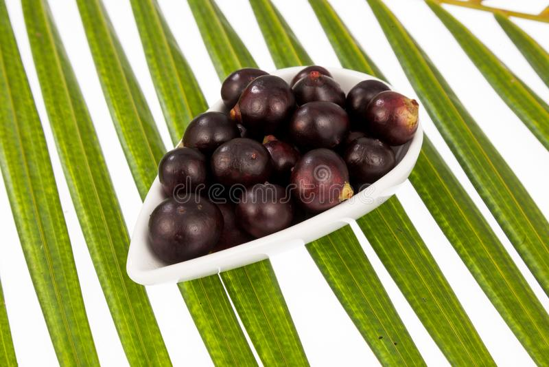 Acai amazonian fruit Euterpe oleracea stock image