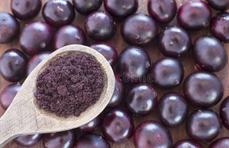 Acai frukt och pulver - Euterpeoleracea arkivfoto