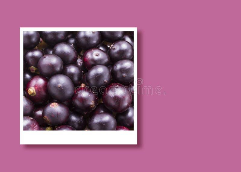 Acai frukter i den ögonblickliga fotoramen, utrymme för text arkivbild