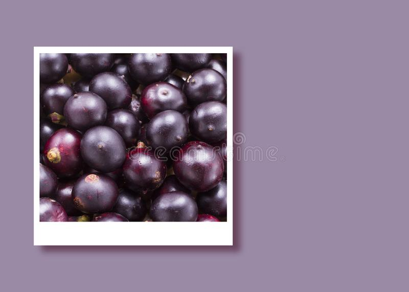 Acai frukter i den ögonblickliga fotoramen, utrymme för text royaltyfri bild