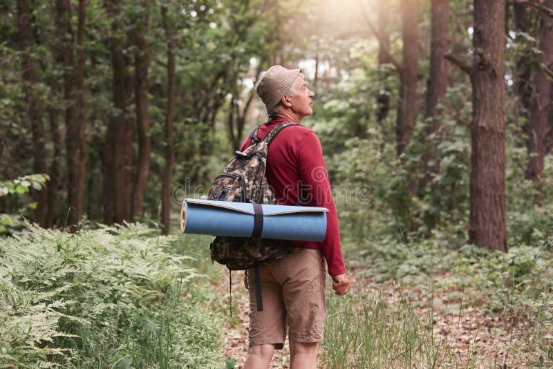 Acampamento, aventura, viajando, conceito ativo da recreação Homem de Eldery com a trouxa e o tapete que caminham na floresta, es fotos de stock