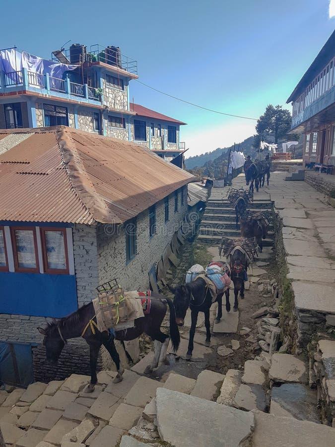 Acampamento base de Annapurna que caminha o passeio na montanha, Himalayas, Nepal Em novembro de 2018 Vila de Ghorepani imagens de stock