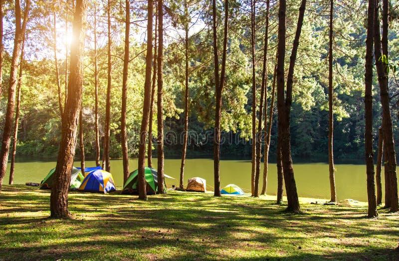 Acampamento e barraca das aventuras sob a floresta do pinho perto da água exterior na manhã e no por do sol na pungência-ung, pin imagens de stock royalty free