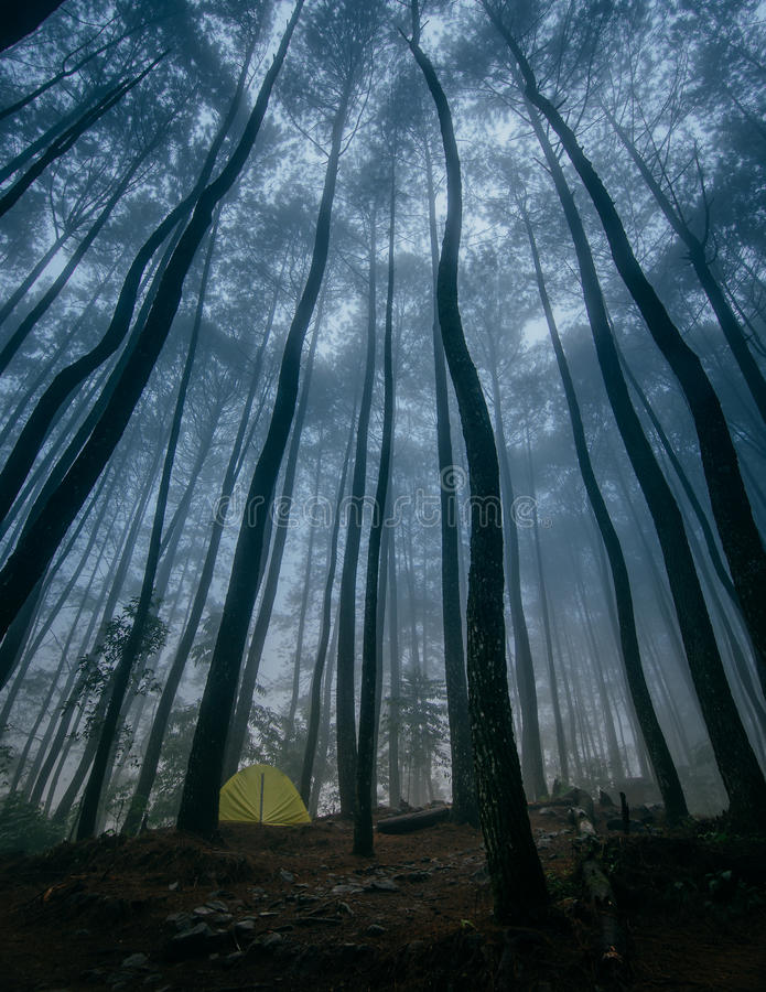 Acampamento na floresta do pinho imagem de stock royalty free